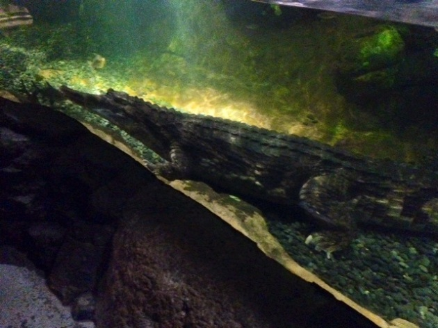 This guy was 17 feet long, or something crazy like that.
